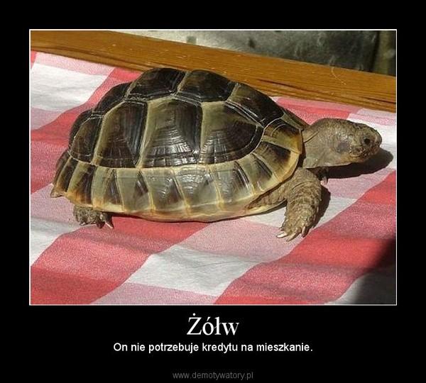 Żółw – On nie potrzebuje kredytu na mieszkanie.