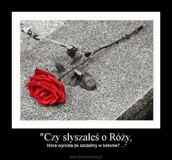 """""""Czy słyszałeś o Róży, –  która wyrosła ze szczeliny w betonie? ..."""""""
