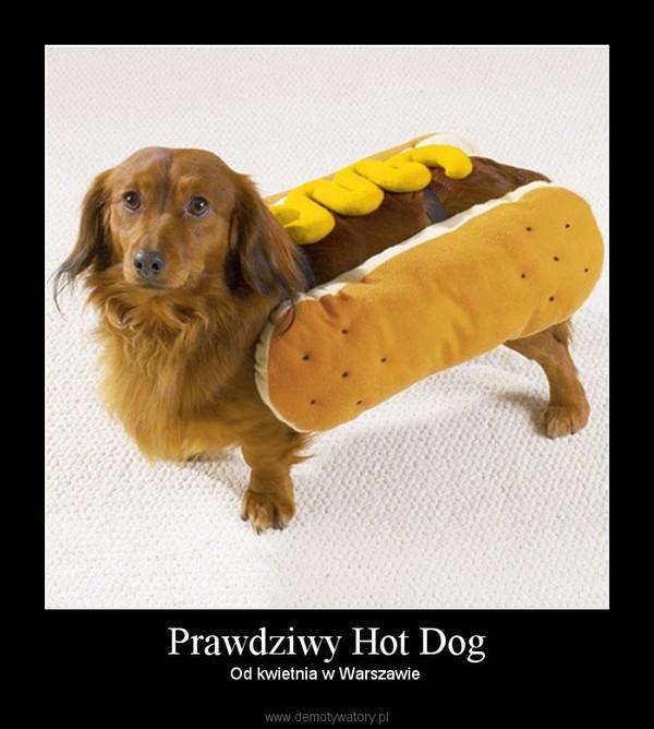 Prawdziwy Hot Dog – Od kwietnia w Warszawie