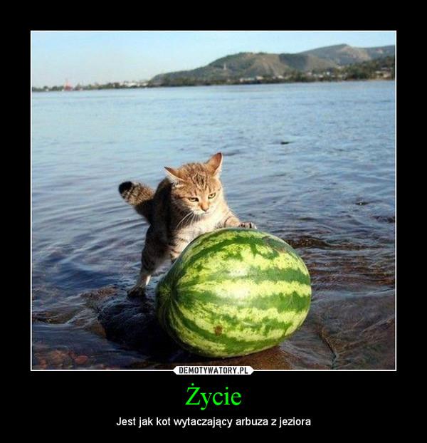 Życie – Jest jak kot wytaczający arbuza z jeziora