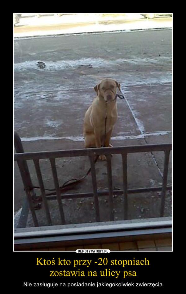 Ktoś kto przy -20 stopniachzostawia na ulicy psa – Nie zasługuje na posiadanie jakiegokolwiek zwierzęcia