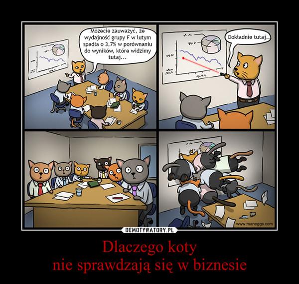 Dlaczego kotynie sprawdzają się w biznesie –