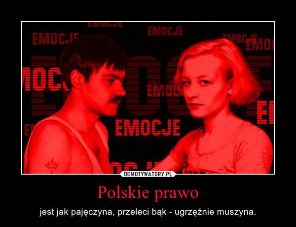 Polskie prawo – jest jak pajęczyna, przeleci bąk - ugrzęźnie muszyna.