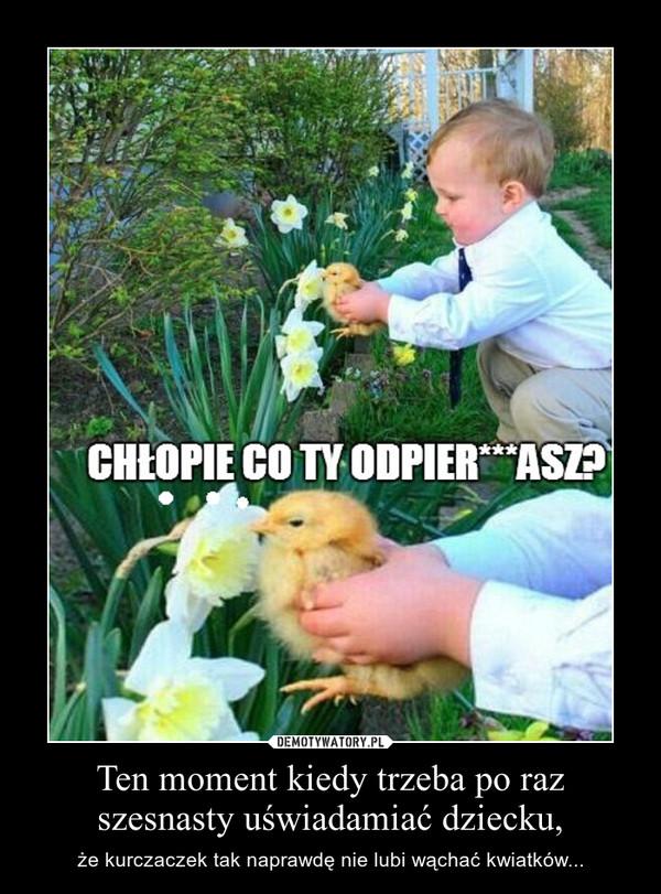Ten moment kiedy trzeba po raz szesnasty uświadamiać dziecku, – że kurczaczek tak naprawdę nie lubi wąchać kwiatków...