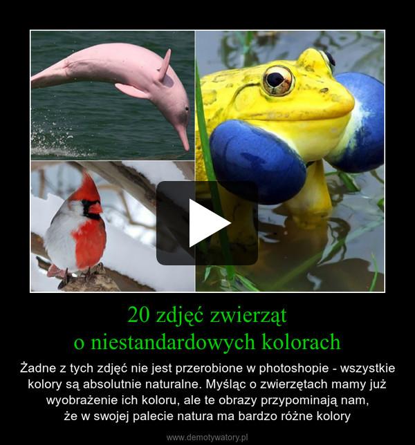 20 zdjęć zwierząto niestandardowych kolorach – Żadne z tych zdjęć nie jest przerobione w photoshopie - wszystkie kolory są absolutnie naturalne. Myśląc o zwierzętach mamy już wyobrażenie ich koloru, ale te obrazy przypominają nam,że w swojej palecie natura ma bardzo różne kolory