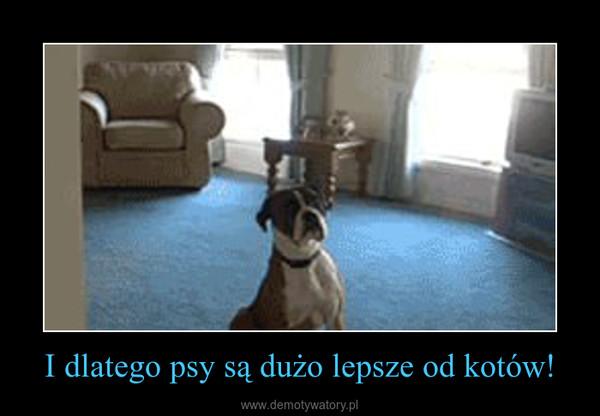 I dlatego psy są dużo lepsze od kotów! –