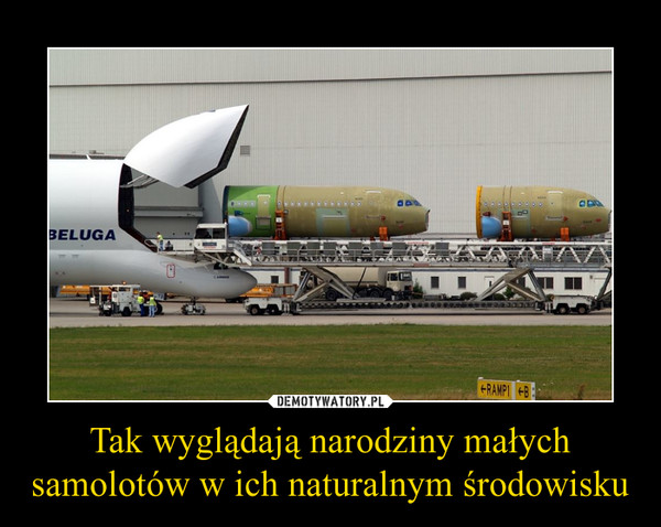 Tak wyglądają narodziny małych samolotów w ich naturalnym środowisku –