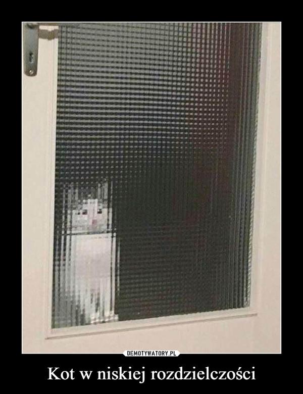 Kot w niskiej rozdzielczości –
