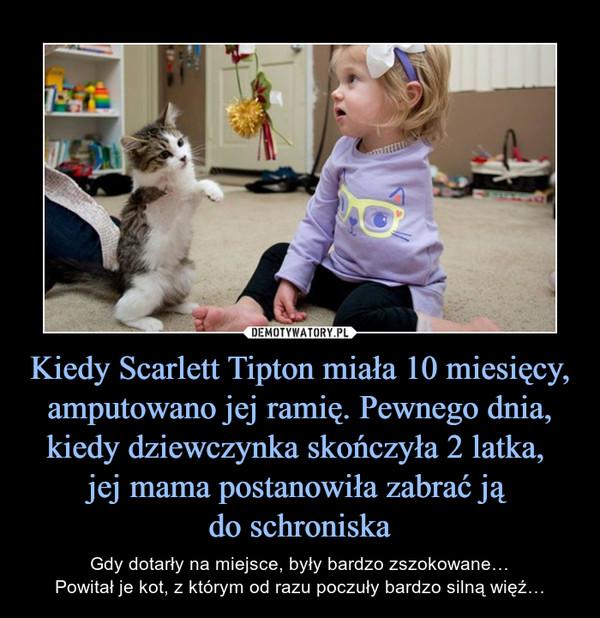 Kiedy Scarlett Tipton miała 10 miesięcy, amputowano jej ramię. Pewnego dnia, kiedy dziewczynka skończyła 2 latka, jej mama postanowiła zabrać ją do schroniska – Gdy dotarły na miejsce, były bardzo zszokowane…Powitał je kot, z którym od razu poczuły bardzo silną więź…