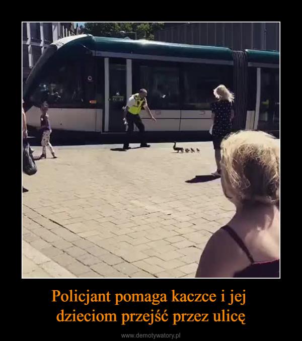 Policjant pomaga kaczce i jej dzieciom przejść przez ulicę –