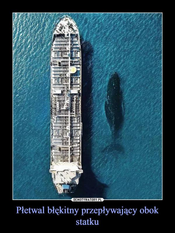 Płetwal błękitny przepływający obok statku –