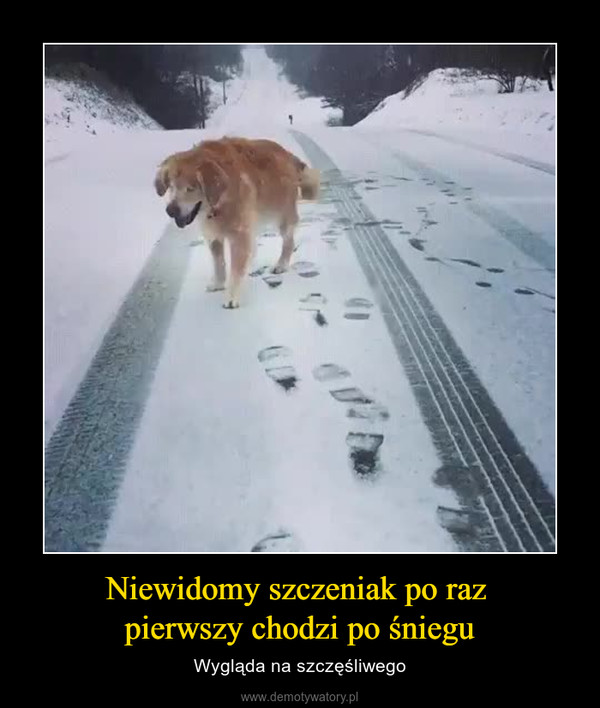 Niewidomy szczeniak po raz pierwszy chodzi po śniegu – Wygląda na szczęśliwego