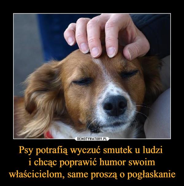 Psy potrafią wyczuć smutek u ludzi i chcąc poprawić humor swoim właścicielom, same proszą o pogłaskanie –