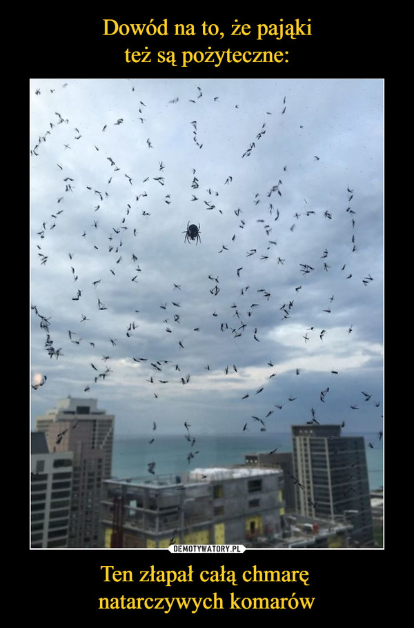 Ten złapał całą chmarę natarczywych komarów –