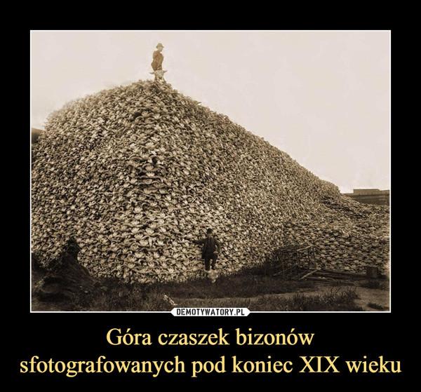 Góra czaszek bizonówsfotografowanych pod koniec XIX wieku –