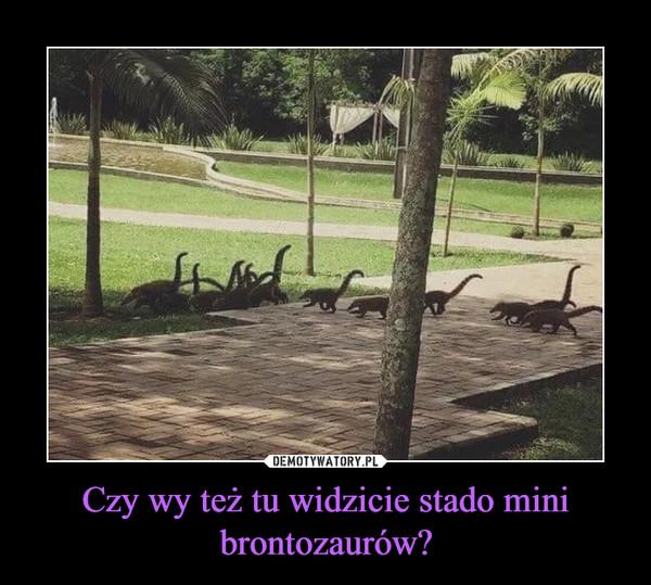 Czy wy też tu widzicie stado mini brontozaurów? –