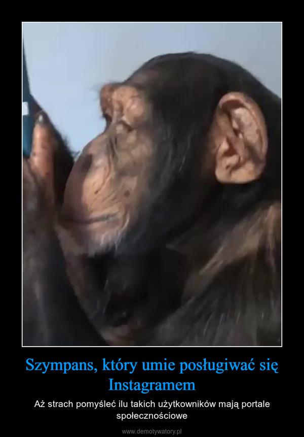 Szympans, który umie posługiwać się Instagramem – Aż strach pomyśleć ilu takich użytkowników mają portale społecznościowe