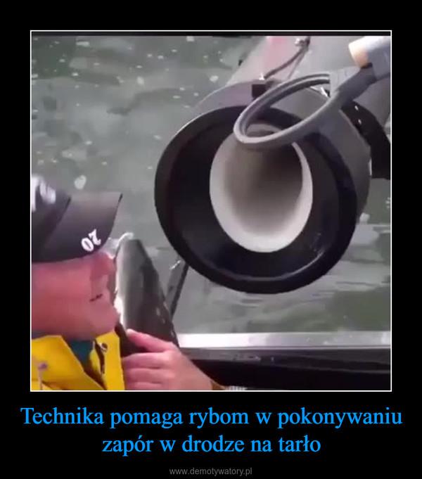 Technika pomaga rybom w pokonywaniu zapór w drodze na tarło –