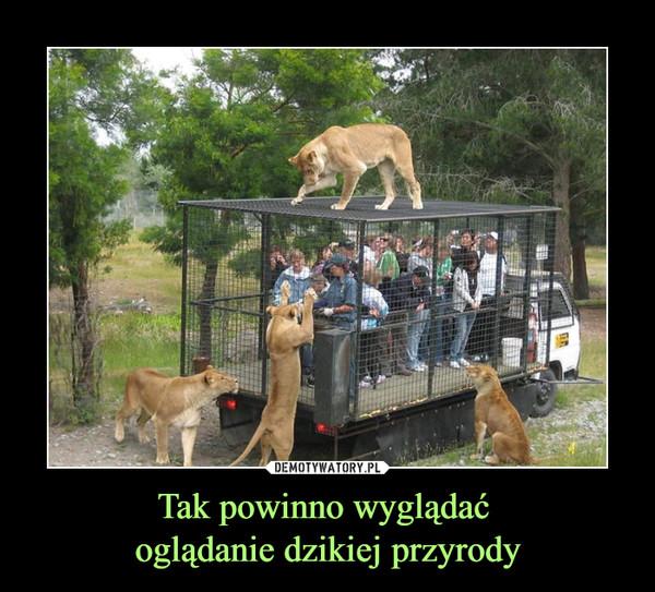 Tak powinno wyglądać oglądanie dzikiej przyrody –