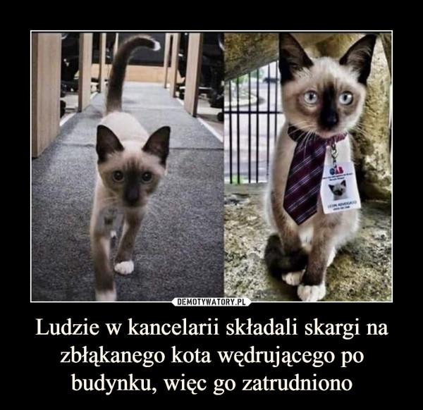 Ludzie w kancelarii składali skargi na zbłąkanego kota wędrującego po budynku, więc go zatrudniono –