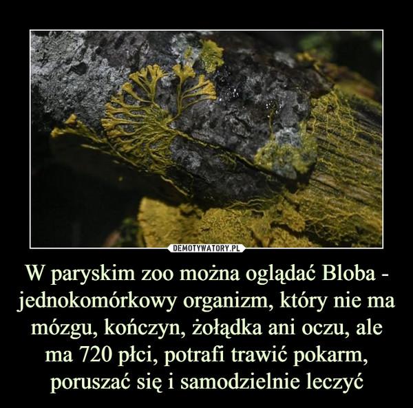 W paryskim zoo można oglądać Bloba - jednokomórkowy organizm, który nie ma mózgu, kończyn, żołądka ani oczu, ale ma 720 płci, potrafi trawić pokarm, poruszać się i samodzielnie leczyć –