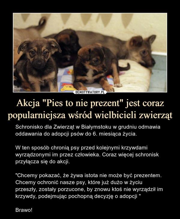 """Akcja """"Pies to nie prezent"""" jest coraz popularniejsza wśród wielbicieli zwierząt – Schronisko dla Zwierząt w Białymstoku w grudniu odmawia oddawania do adopcji psów do 6. miesiąca życia. W ten sposób chronią psy przed kolejnymi krzywdami wyrządzonymi im przez człowieka. Coraz więcej schronisk przyłącza się do akcji.""""Chcemy pokazać, że żywa istota nie może być prezentem. Chcemy ochronić nasze psy, które już dużo w życiu przeszły, zostały porzucone, by znowu ktoś nie wyrządził im krzywdy, podejmując pochopną decyzję o adopcji """"Brawo!"""