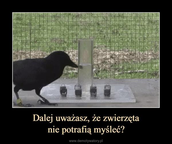 Dalej uważasz, że zwierzętanie potrafią myśleć? –