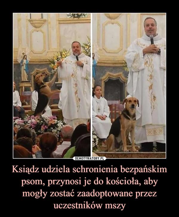 Ksiądz udziela schronienia bezpańskim psom, przynosi je do kościoła, aby mogły zostać zaadoptowane przez uczestników mszy –