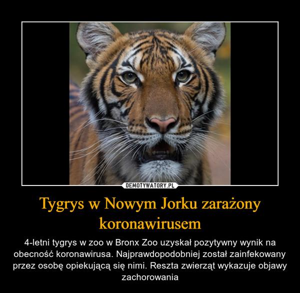 Tygrys w Nowym Jorku zarażony koronawirusem – 4-letni tygrys w zoo w Bronx Zoo uzyskał pozytywny wynik na obecność koronawirusa. Najprawdopodobniej został zainfekowany przez osobę opiekującą się nimi. Reszta zwierząt wykazuje objawy zachorowania