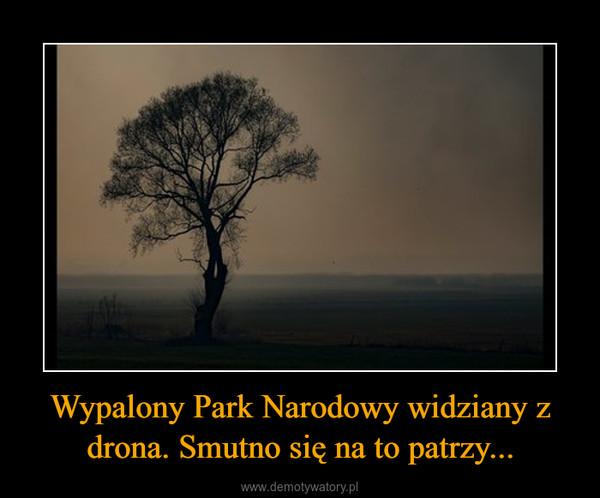 Wypalony Park Narodowy widziany z drona. Smutno się na to patrzy... –