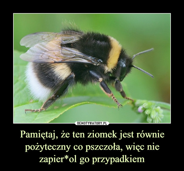 Pamiętaj, że ten ziomek jest równie pożyteczny co pszczoła, więc nie zapier*ol go przypadkiem –