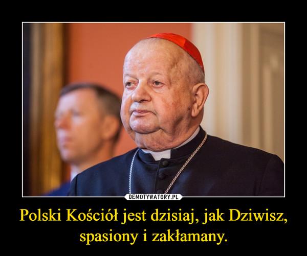 Polski Kościół jest dzisiaj, jak Dziwisz, spasiony i zakłamany. –