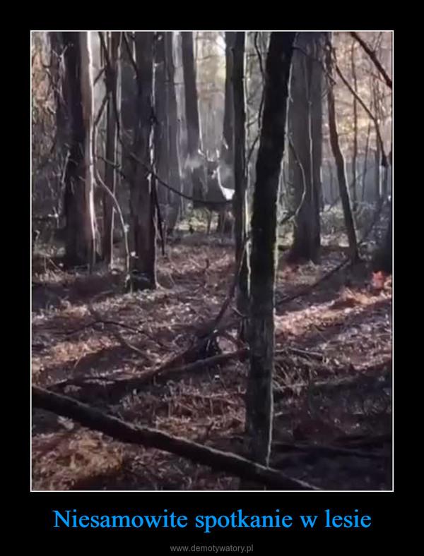 Niesamowite spotkanie w lesie –