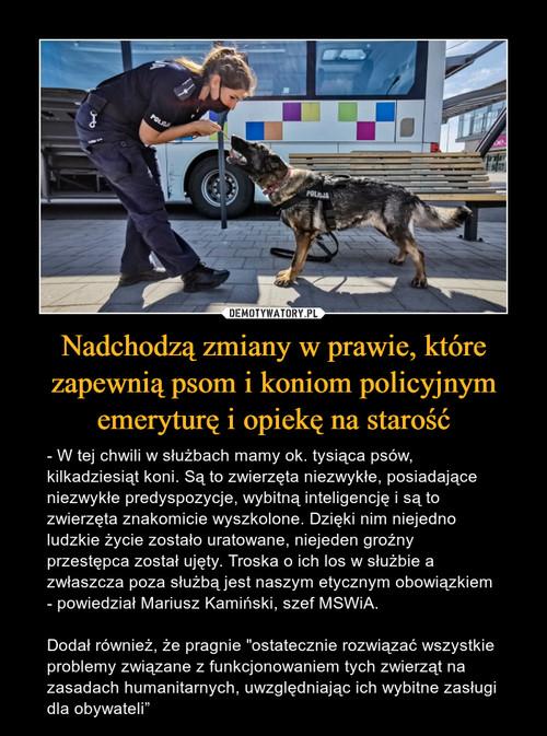 Nadchodzą zmiany w prawie, które zapewnią psom i koniom policyjnym emeryturę i opiekę na starość