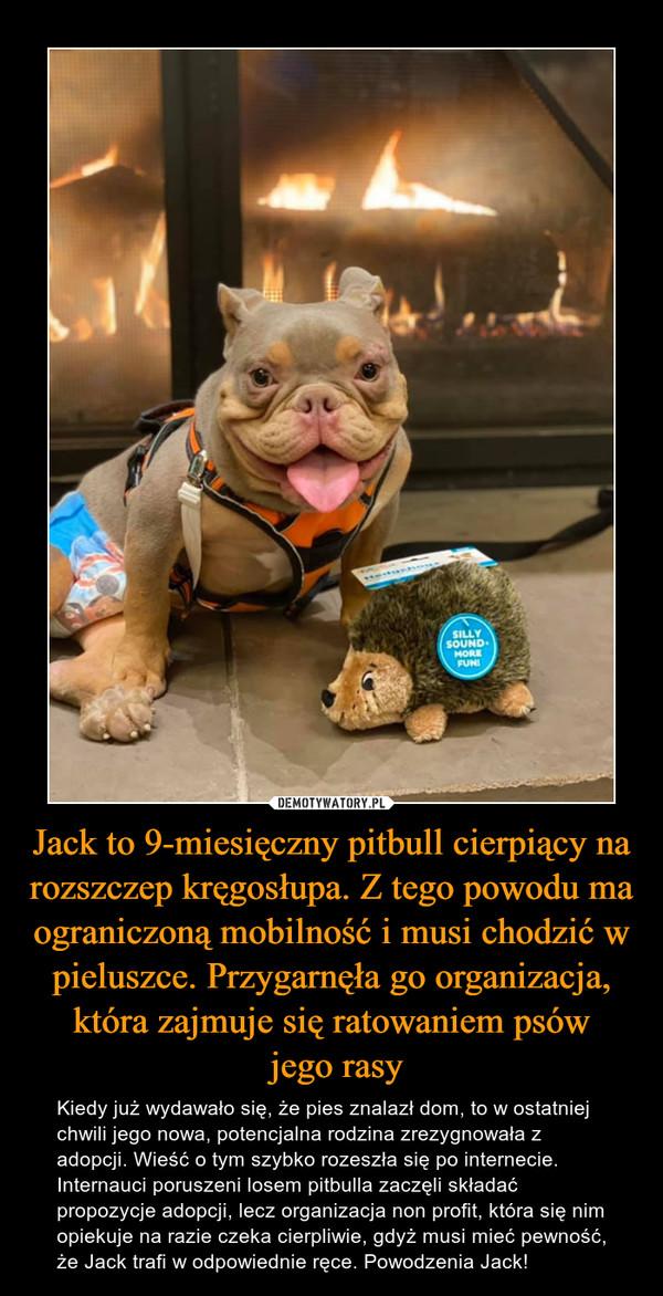 Jack to 9-miesięczny pitbull cierpiący na rozszczep kręgosłupa. Z tego powodu ma ograniczoną mobilność i musi chodzić w pieluszce. Przygarnęła go organizacja, która zajmuje się ratowaniem psów jego rasy – Kiedy już wydawało się, że pies znalazł dom, to w ostatniej chwili jego nowa, potencjalna rodzina zrezygnowała z adopcji. Wieść o tym szybko rozeszła się po internecie. Internauci poruszeni losem pitbulla zaczęli składać propozycje adopcji, lecz organizacja non profit, która się nim opiekuje na razie czeka cierpliwie, gdyż musi mieć pewność, że Jack trafi w odpowiednie ręce. Powodzenia Jack!