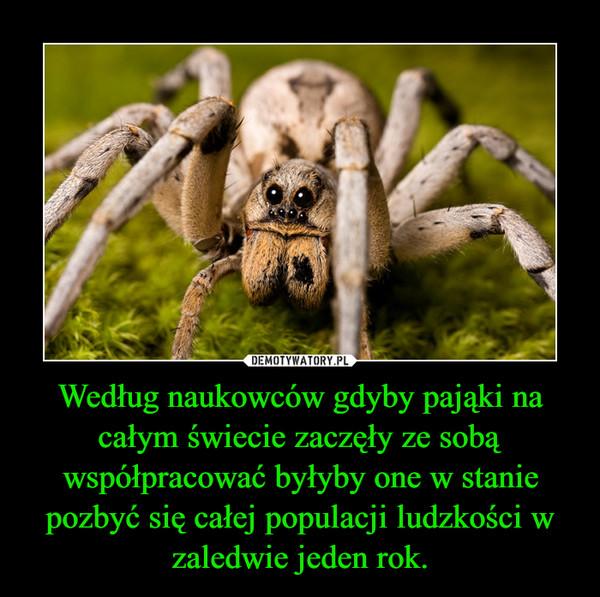 Według naukowców gdyby pająki na całym świecie zaczęły ze sobą współpracować byłyby one w stanie pozbyć się całej populacji ludzkości w zaledwie jeden rok. –