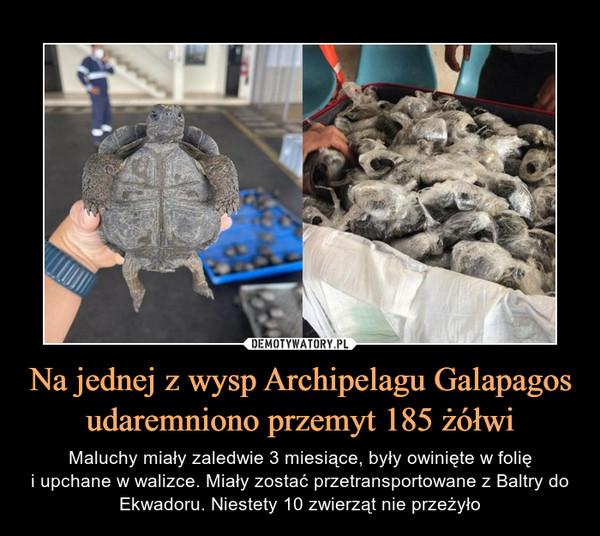 Na jednej z wysp Archipelagu Galapagos udaremniono przemyt 185 żółwi – Maluchy miały zaledwie 3 miesiące, były owinięte w folięi upchane w walizce. Miały zostać przetransportowane z Baltry do Ekwadoru. Niestety 10 zwierząt nie przeżyło