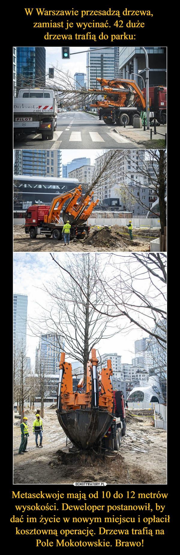 Metasekwoje mają od 10 do 12 metrów wysokości. Deweloper postanowił, by dać im życie w nowym miejscu i opłacił kosztowną operację. Drzewa trafią na Pole Mokotowskie. Brawo! –