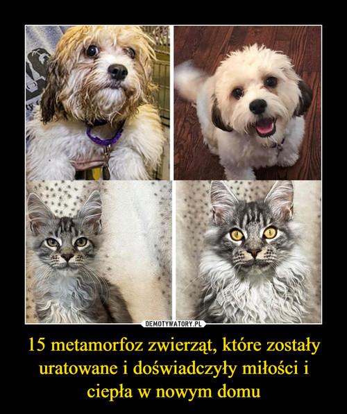 15 metamorfoz zwierząt, które zostały uratowane i doświadczyły miłości i ciepła w nowym domu