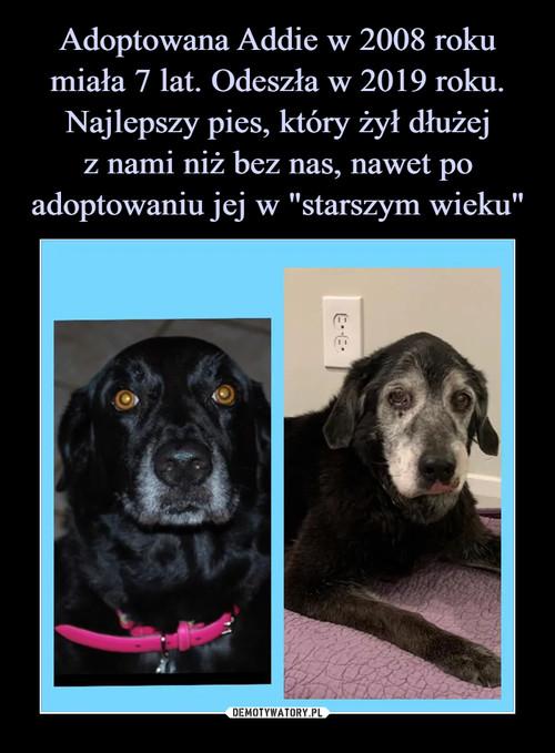 """Adoptowana Addie w 2008 roku miała 7 lat. Odeszła w 2019 roku. Najlepszy pies, który żył dłużej z nami niż bez nas, nawet po adoptowaniu jej w """"starszym wieku"""""""