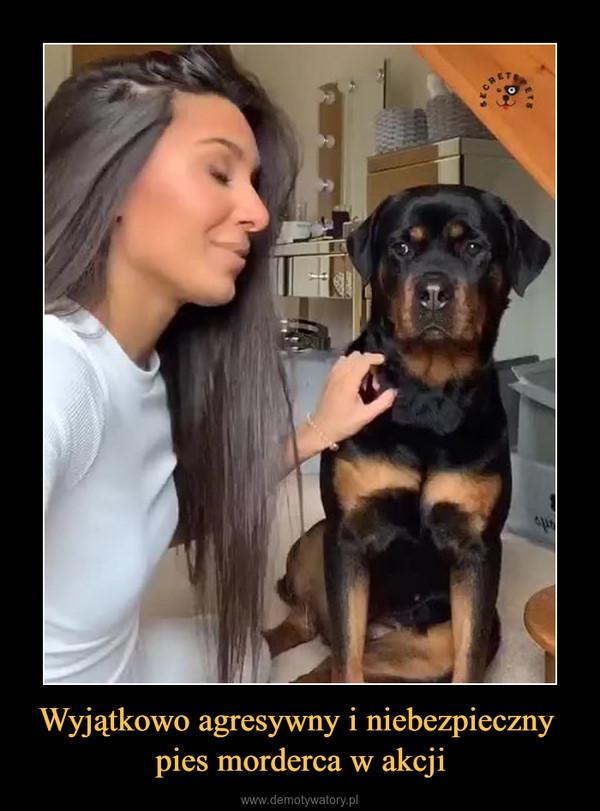 Wyjątkowo agresywny i niebezpieczny pies morderca w akcji –