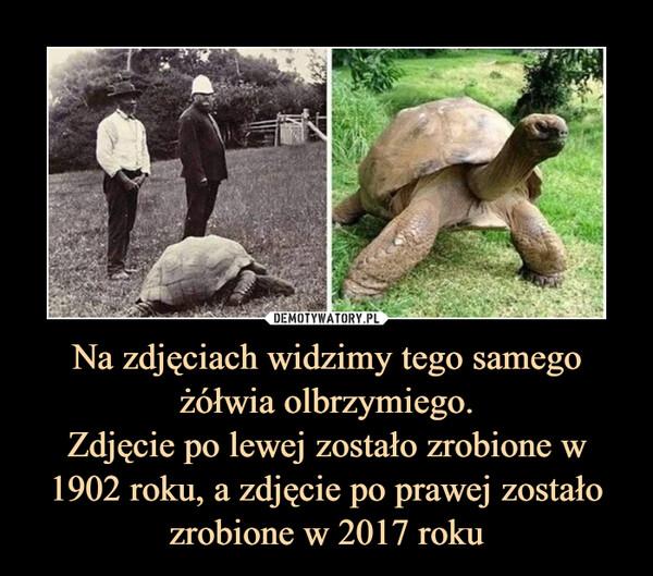 Na zdjęciach widzimy tego samego żółwia olbrzymiego.Zdjęcie po lewej zostało zrobione w 1902 roku, a zdjęcie po prawej zostało zrobione w 2017 roku –