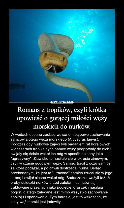 Romans z tropików, czyli krótka opowieść o gorącej miłości węży morskich do nurków.
