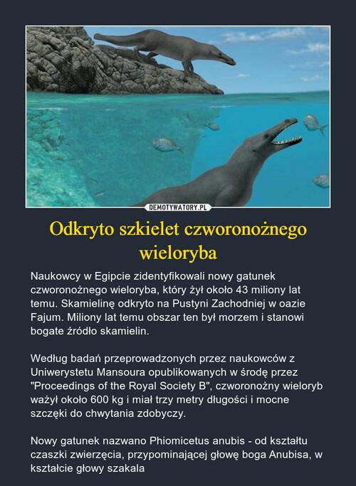 Odkryto szkielet czworonożnego wieloryba