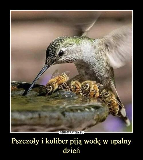 Pszczoły i koliber piją wodę w upalny dzień