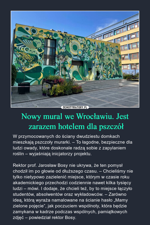 Nowy mural we Wrocławiu. Jest  zarazem hotelem dla pszczół